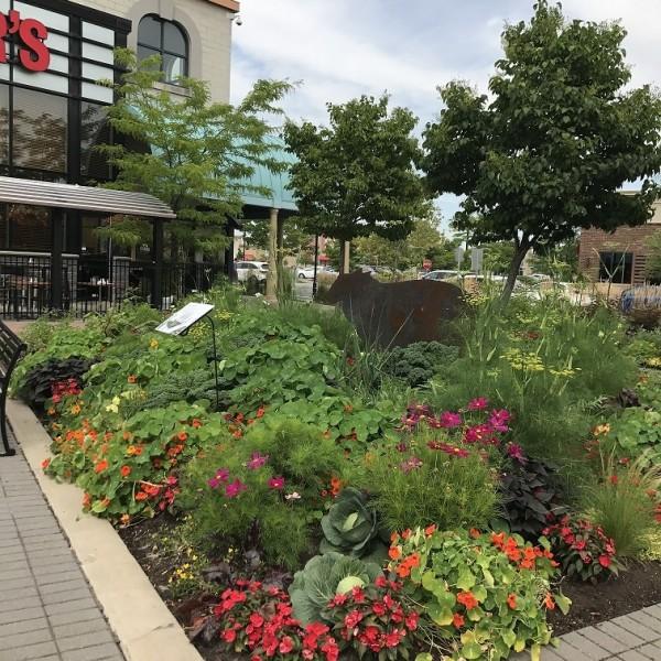 2017 - Vegetable garden
